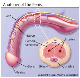 Cock Ring And Penis Nerve Damage