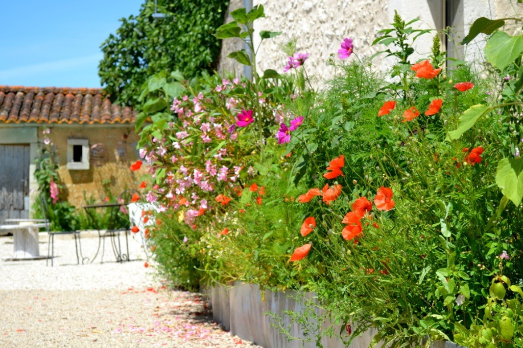 Terrasse La Grange - Gites du Maréchat à Cabariot Extérieurs fleuris