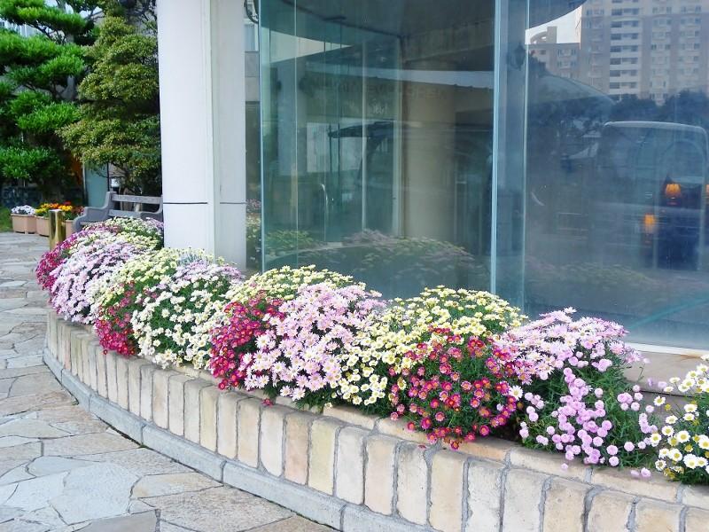 マホロバ玄関アプローチ周りの花