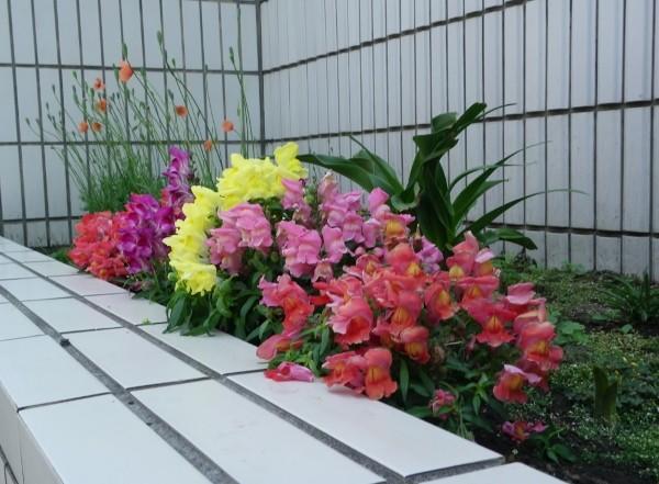 植込みの花