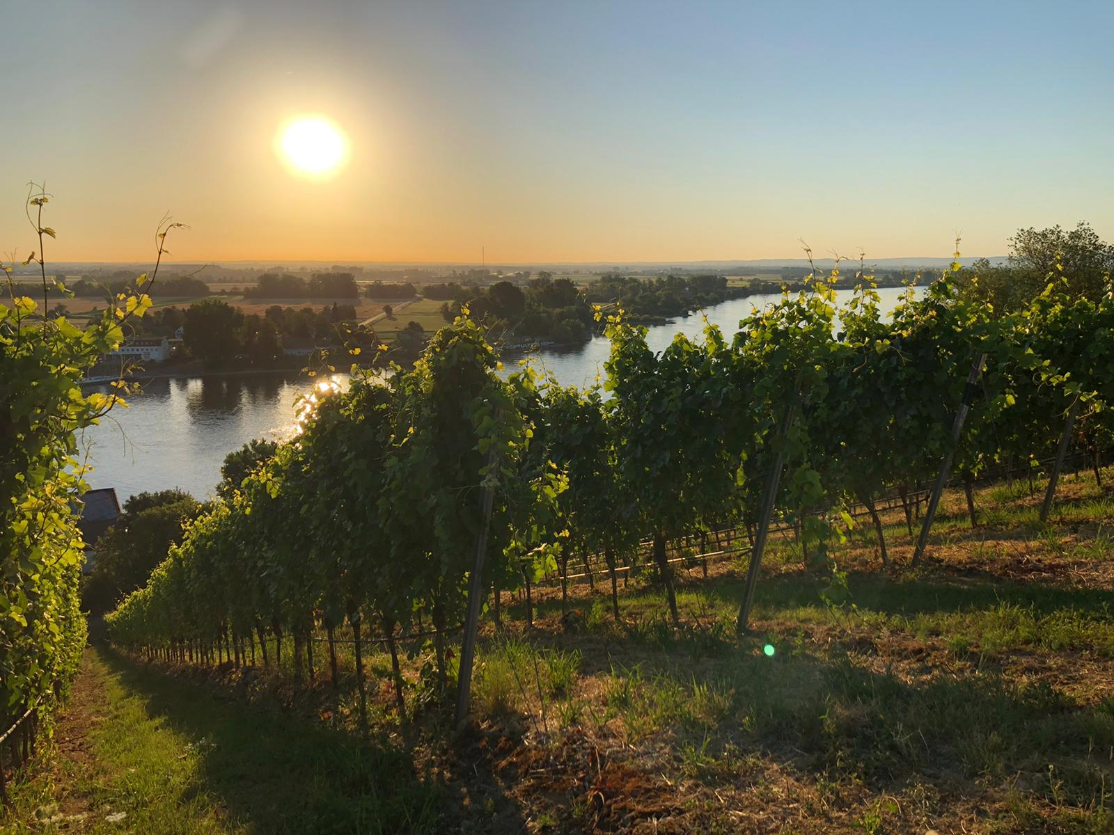 Weingut Eckehart Gröhl - Rheinhessen