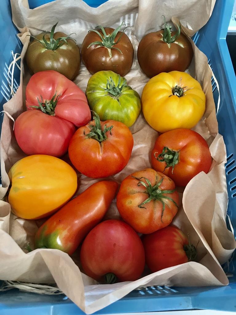 Tomaten vom Kleverhof