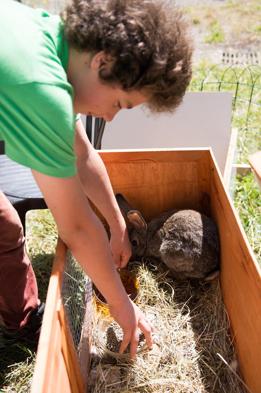 La concrétisation du projet animal : Brioche le lapin, mascotte du collège.