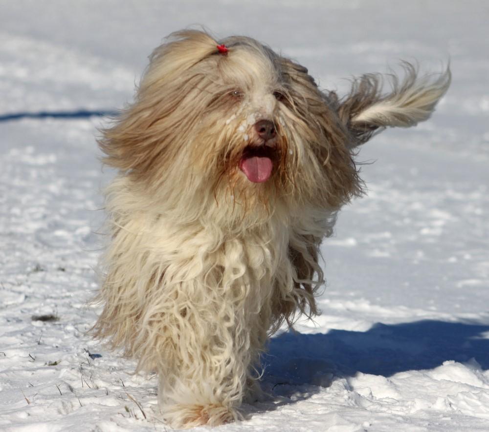 Lea - die Schneeprinzessin, mittlerweile ist sie etwas ruhiger geworden.