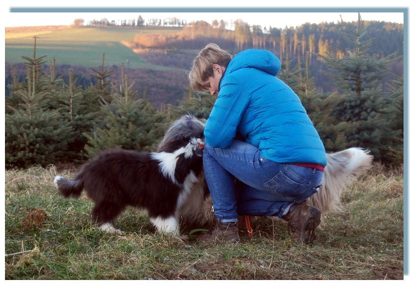Mina - durch sie hat die Siedlinghausener- Beardie-Wandergruppe wieder ein fünftes Mitglied. So sehe ich sie fast wöchentlich und kann an ihr hautnah erleben wie sie heran wächst, welche Dummheiten sie macht, als die Milchzähne ausfielen, die erste Läufi