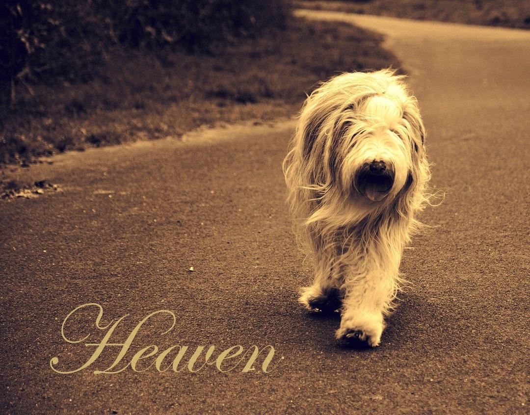 Die wunderschöne Heaven