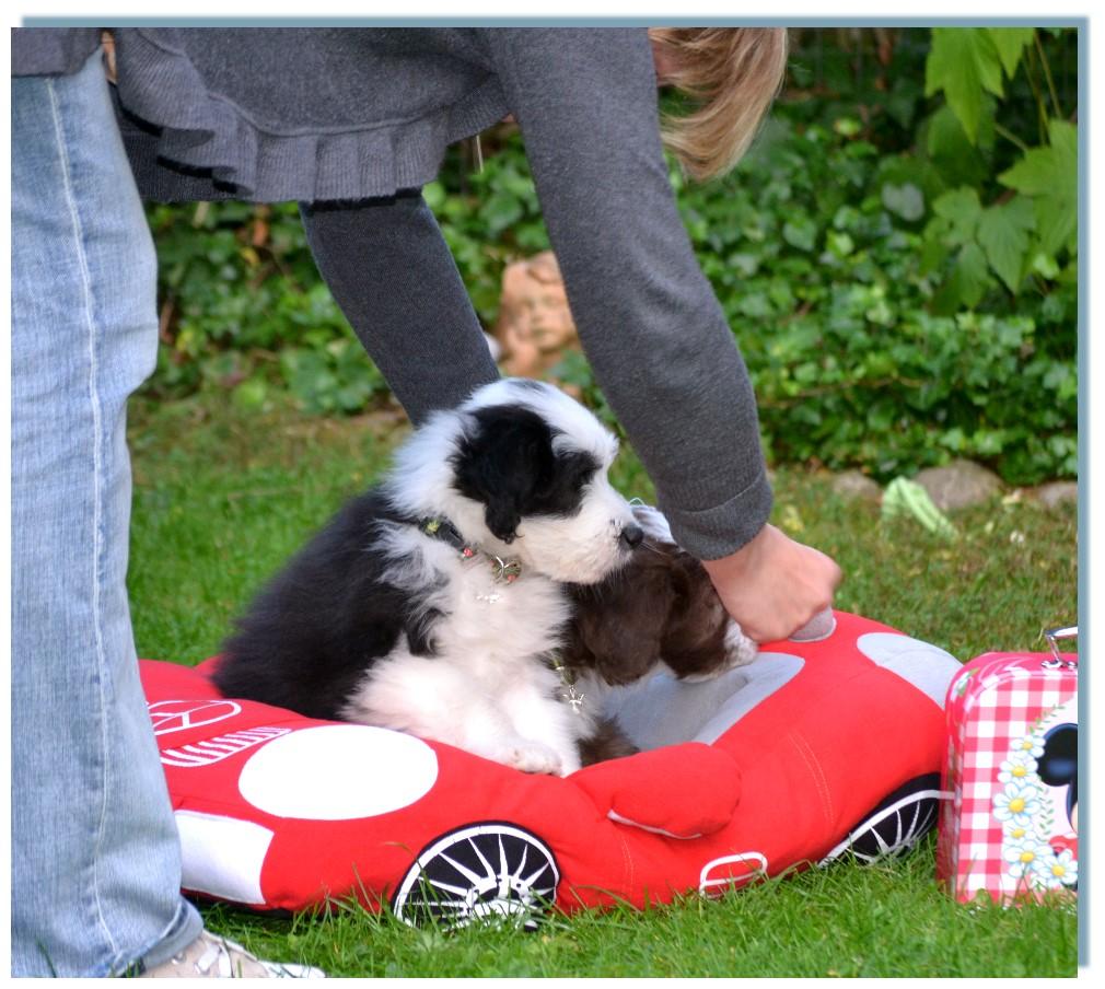 Gino und Geordie bei ihrer ersten Autofahrt - Jungs ihr fahrt in die falsche Richtung