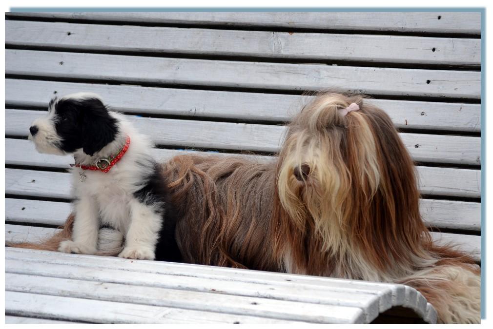Schaut mal, ich darf mit Mama Easy auf der Bank sitzen !