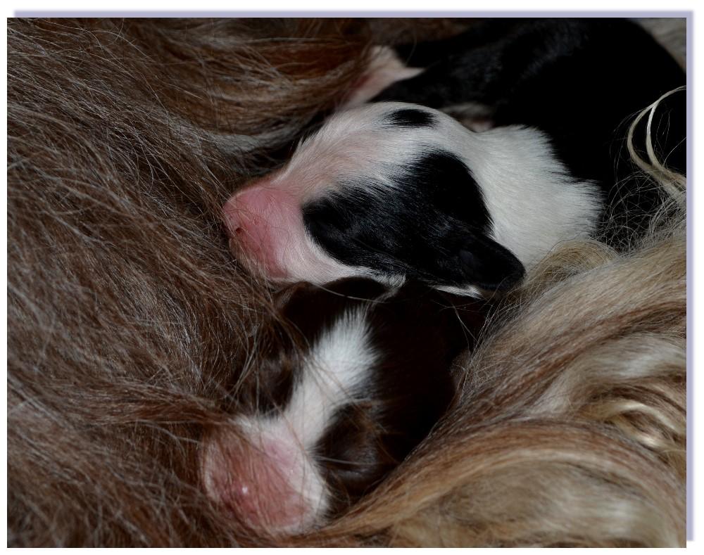 Eine liebevolle kuschelige Mama ist besser als ein Daunenkissen.