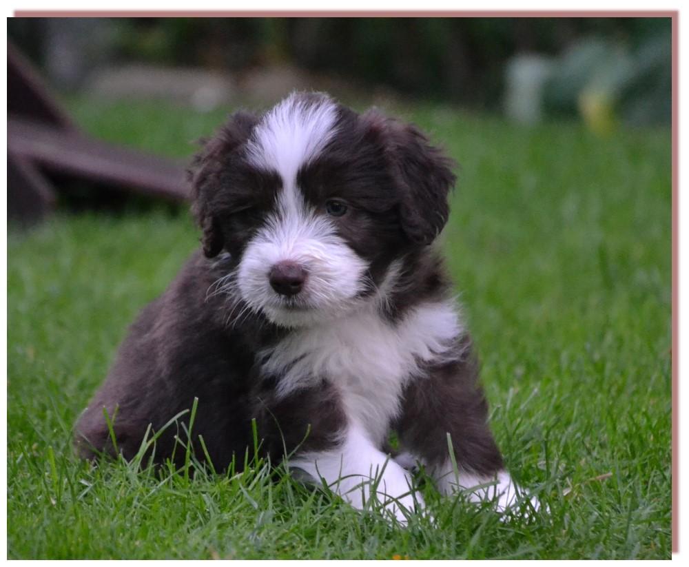 Auch kleine Glückspilze werden mal groß und müssen sich ihr Hundefutter irgendwie verdienen. Hier ein paar Vorschläge Geordie ...