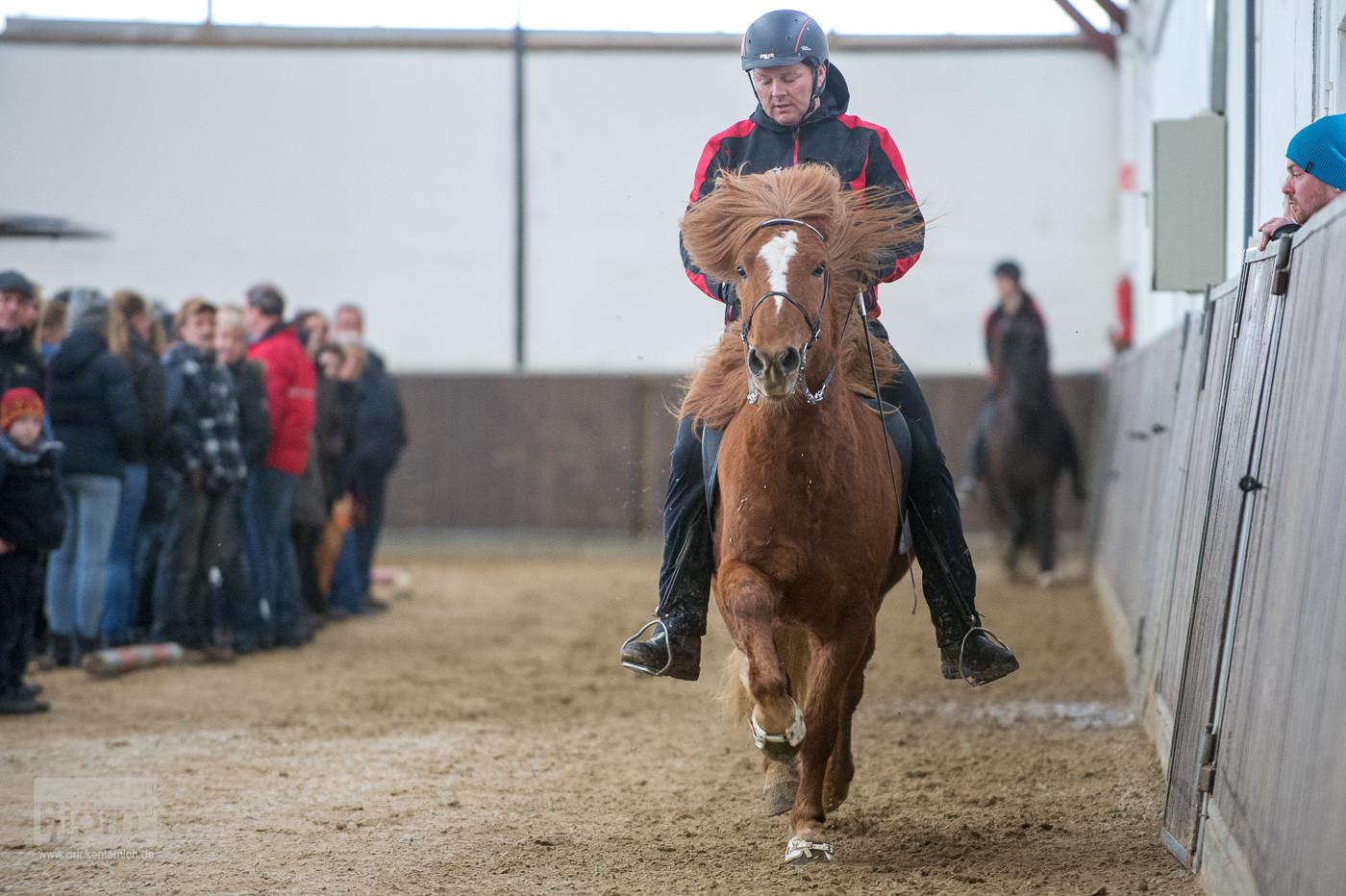 Stymmi auf Naskur von Federath (Verkaufspferd)