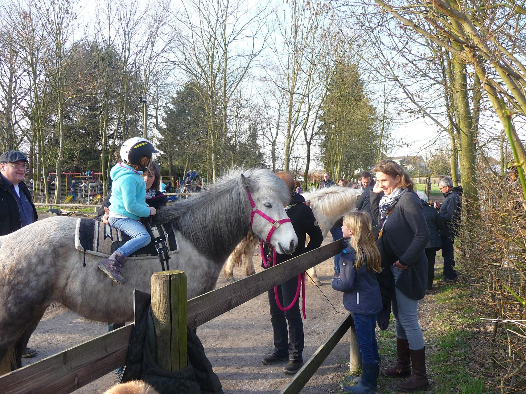 #164 Naela war als Schimmel und wegen des pinkfarbenen Halfters bei den kleinen Reiterinnen besonders beliebt.