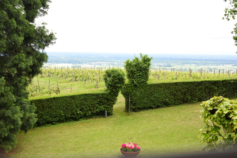Hoch über Baden-Baden liegt das Weingut Nägelsförst, umringt von sonnenverwöhnten Spitzen-Terroirs