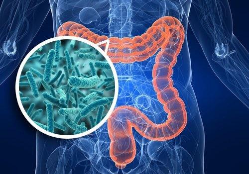 Equilibrer ses bactéries intestinales musculation et prise de masse et sèche