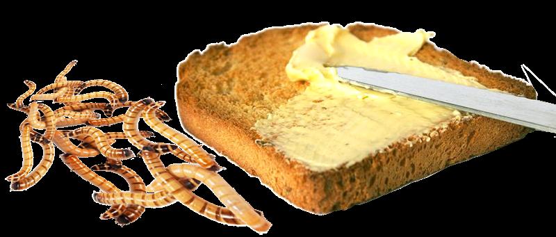 Масло из насекомых. Почему бы и нет?