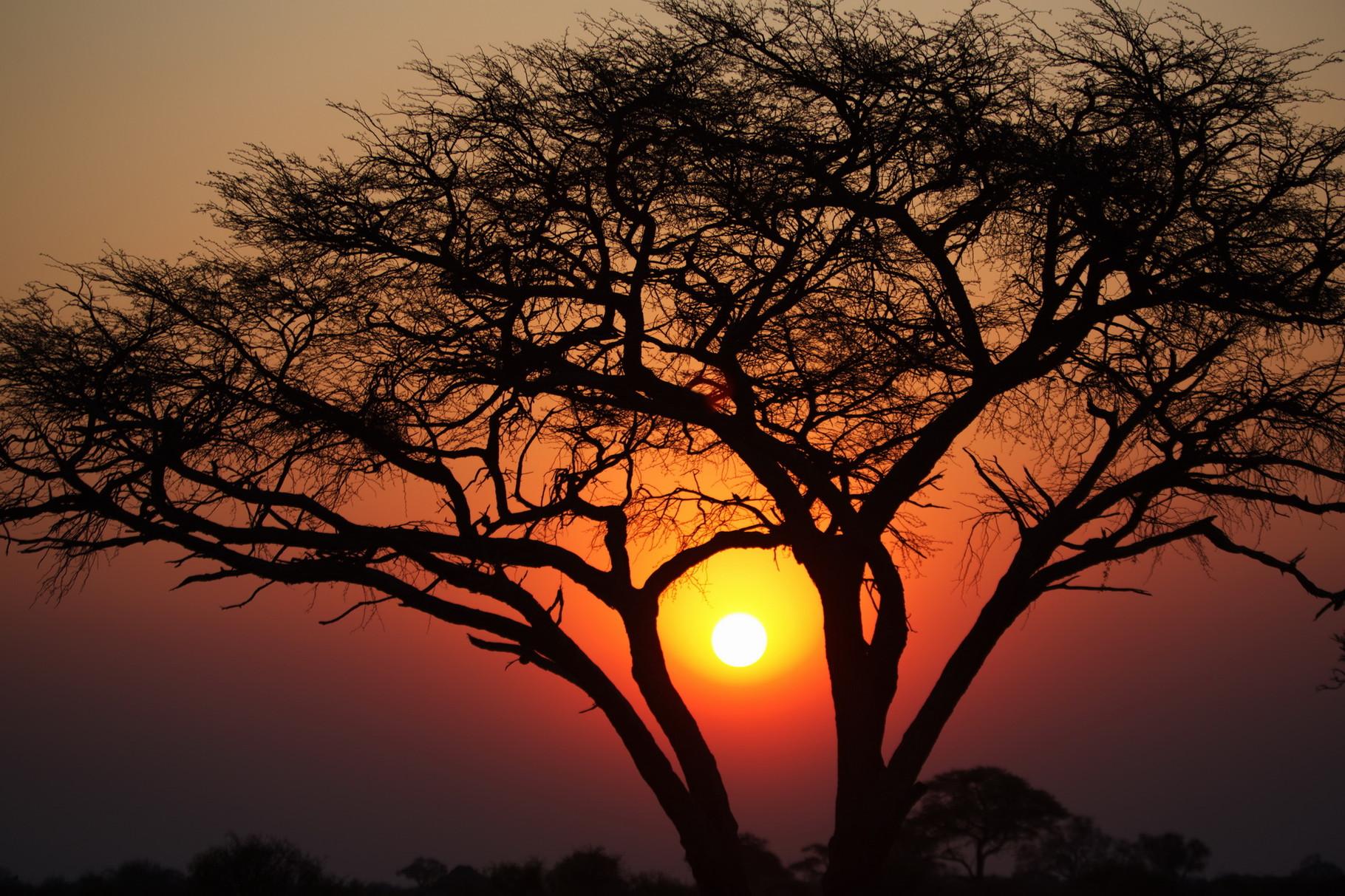 Sonnenuntergang im Hwange NP in Simbabwe