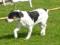 Großmutter: My Bonnie Ikea-Danish-Swedish-Farmdog-dänischer Bauernhund-dänischer Landhund
