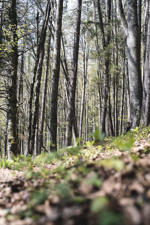 Wandern im  Karwendel/Tirol: Vomper Loch - Zwerchloch