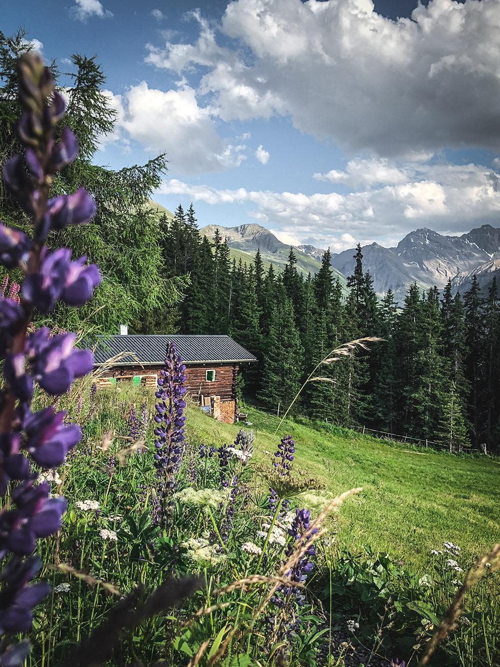 Wanderung zur Schaukäserei Clavadeler Alp - DAVOS