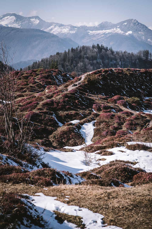 Schneerosenwanderung am Wilden Kaiser in Tirol, Rundwanderung vom Hintersteiner See zur Walleralm und Aussichtsberg Kreuzbichl   Wandern im Frühling - beste Zeit für die Schneerosen-Blüte: März    #wilderkaiser #kitzbüheleralpen #mountainhideaways