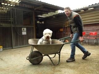 Tappo tijdens zijn werk als therapie-hond.
