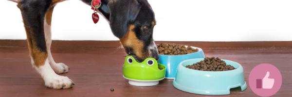 hundefutter, hundefutter wechsel, allergie hund