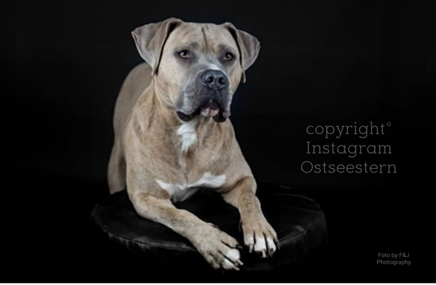 Instagram :  @ostseestern