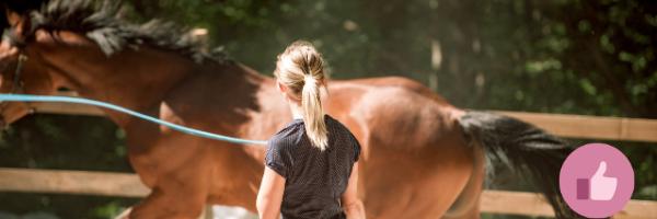 bodenarbeit, freiarbeit, pferd. horsemanship