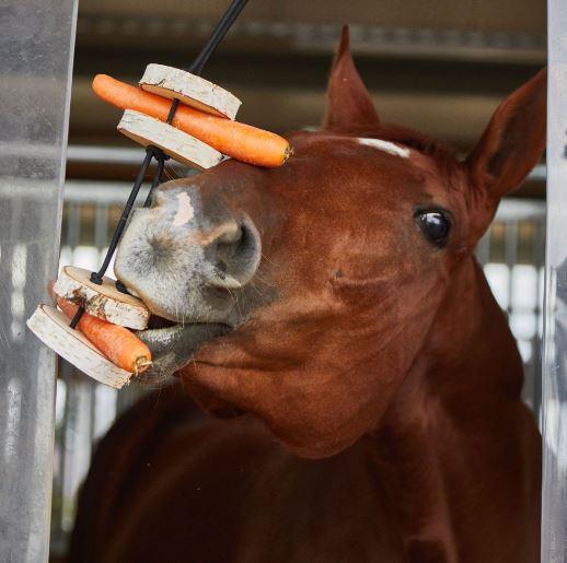 Alle Pferde lieben Möhren