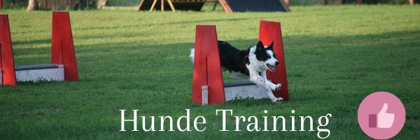 Überfluss im Hunde-Training