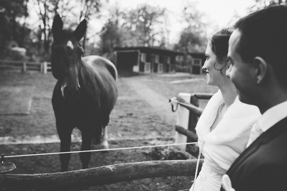Brautpaar trifft beim Spaziergang ein Pferd