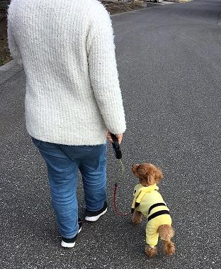 お散歩トレーニング