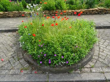 Blühinsel in einer Parkbucht, von Anwohnern in Lingen-Gauerbach in Absprache mit der Stadt angelegt. (Foto: August Rolfes)