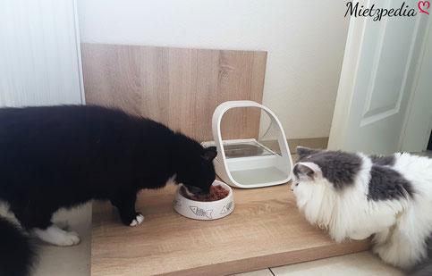 Fiou steht schon an, um auch eine Portion zu bekommen.