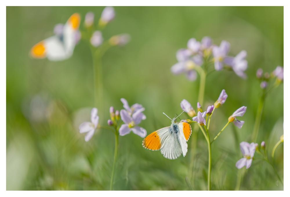 L'Aurore du printemps