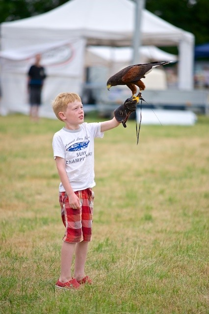 The Falconry Display