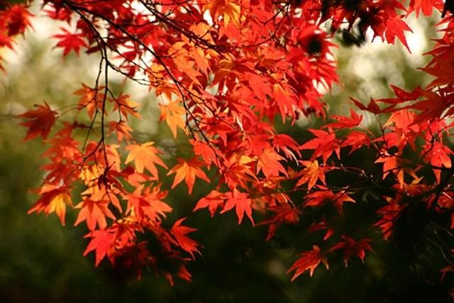コントラストが綺麗な紅葉