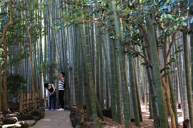 孟宗竹の林で深呼吸