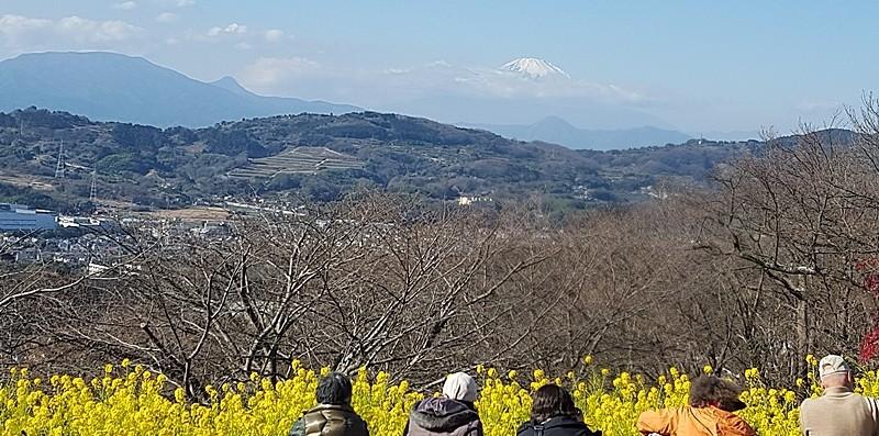 富士山を眺める人