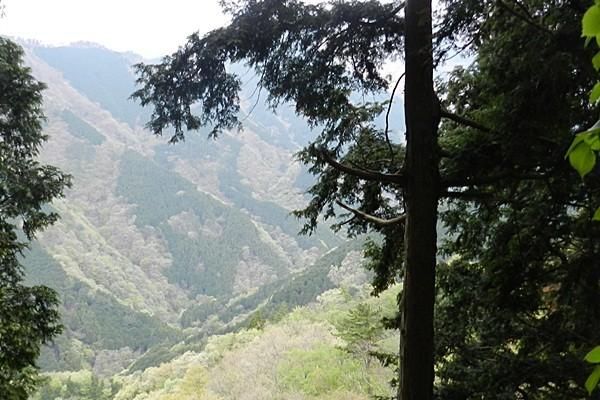 15 戸沢林道を見下ろす