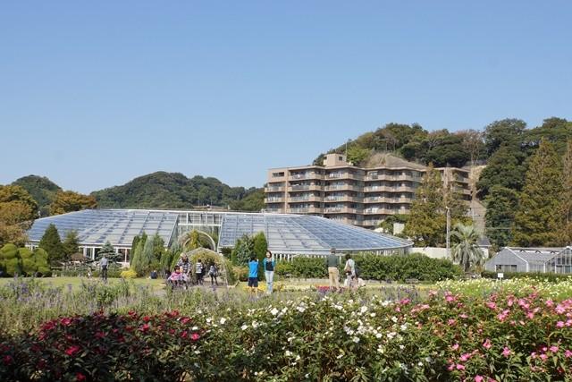 フラワーセンター熱帯温室