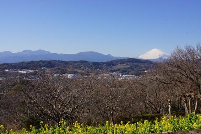 待望の富士山が見える