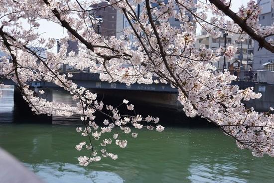 川面に映った満開の桜