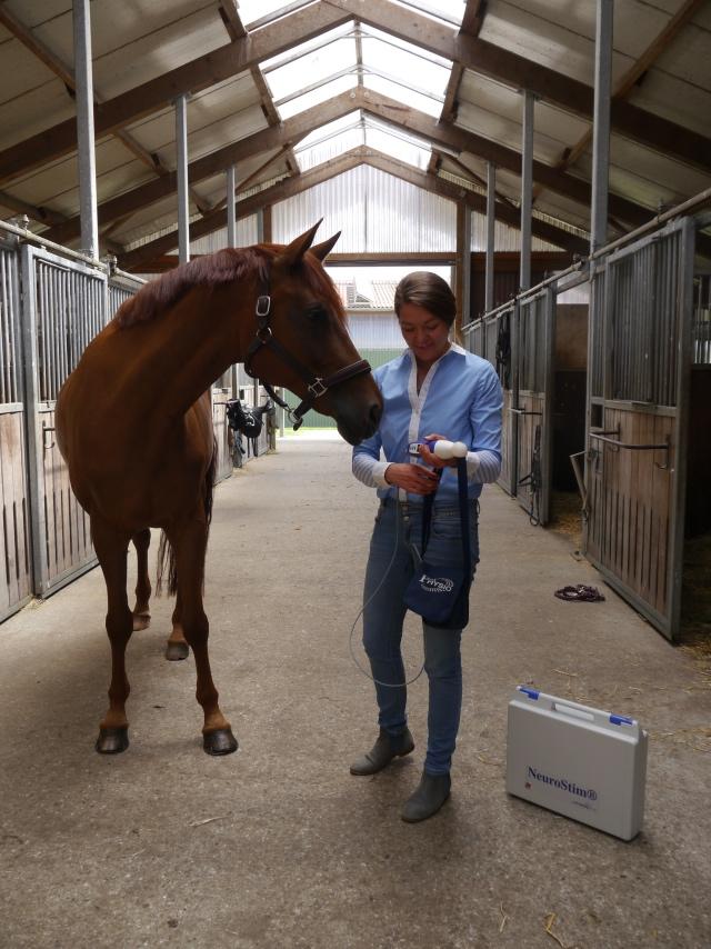 Pferdeosteopathie Lisa Kullmann