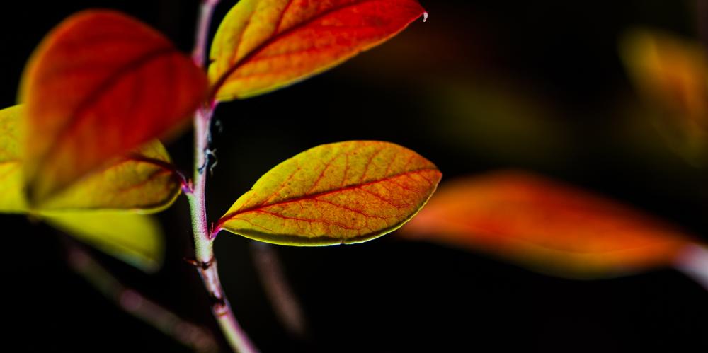 Blatt Licht Heidelbeeren Farben Emanuel Niederhauser pic4you