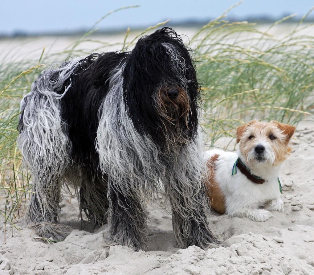 Bo und Mats im Urlaub