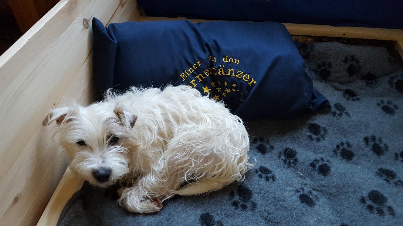 Calle hat auch Gefallen an dem weichen Bett