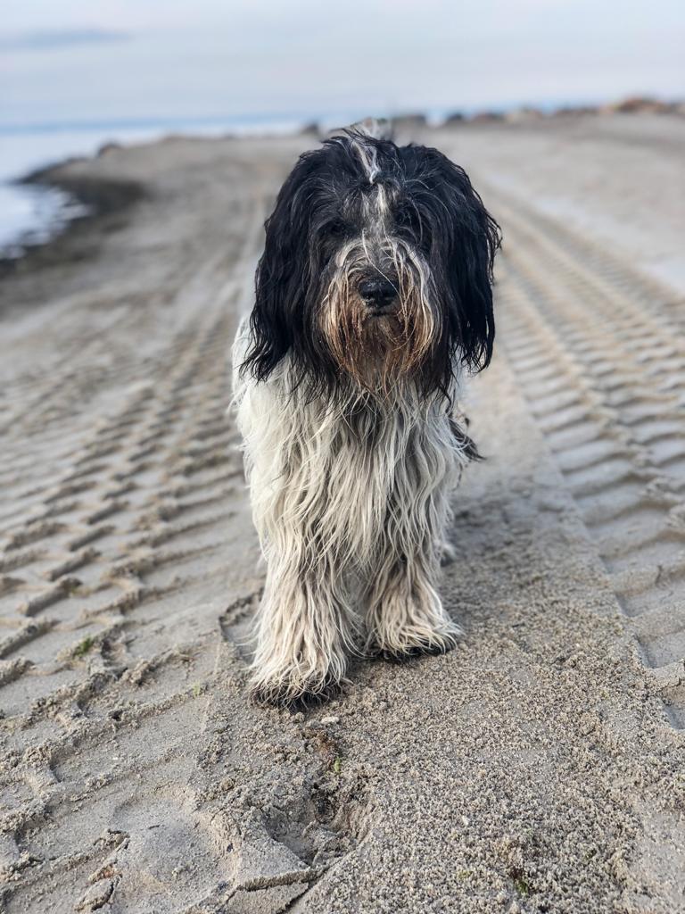 Pepper allein am Strand