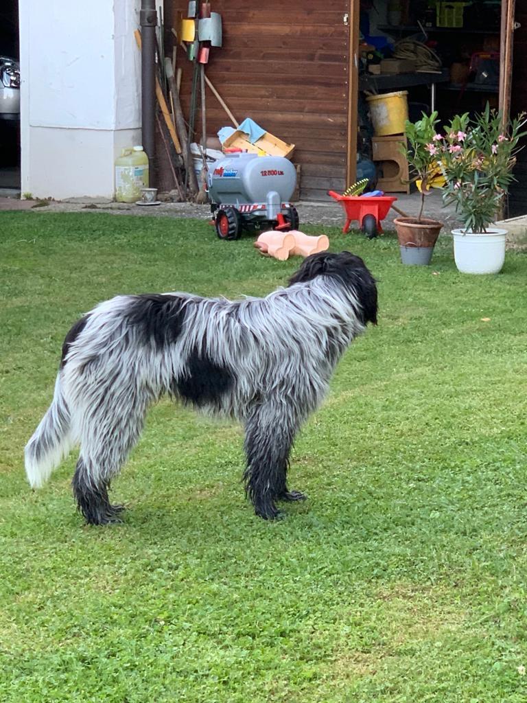 Bayko 6 Monate