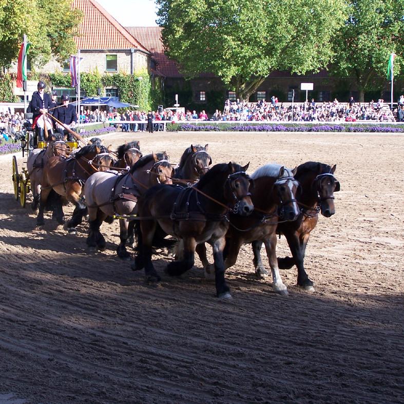 Warendorfer Hengstparade
